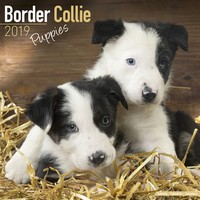 Border Collie Puppies Wall Calendar 2019 by Avonside