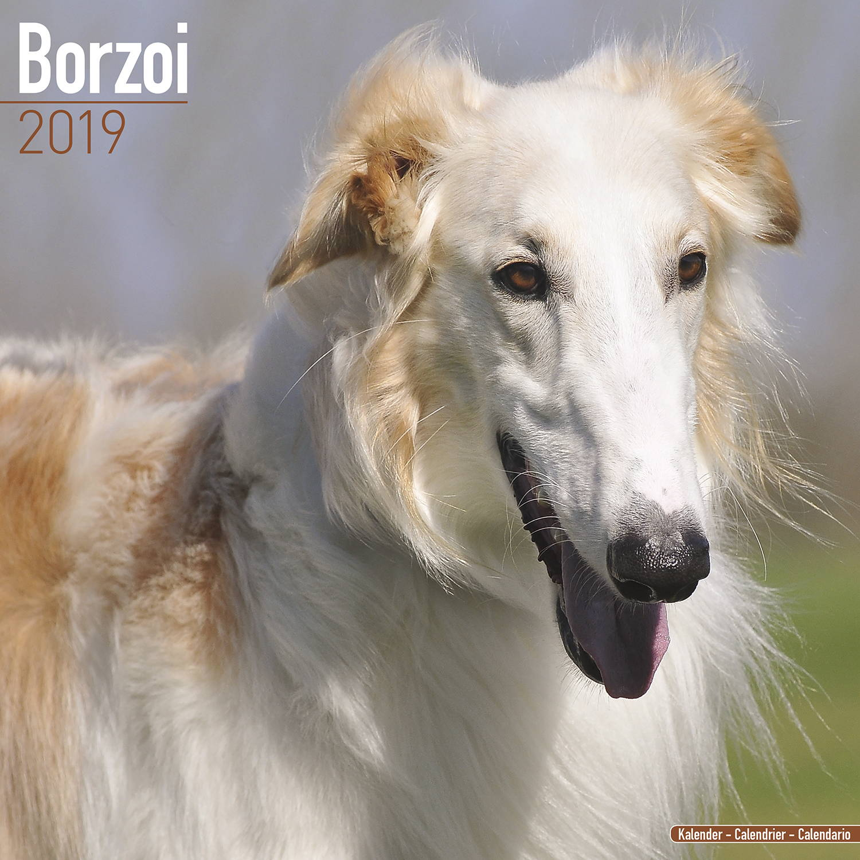 Borzoi Dog Food