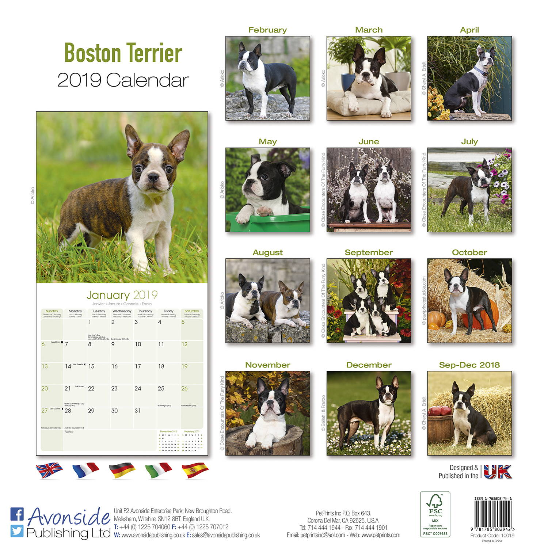 Dog Breeds Advent Calendar