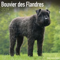 Bouvier Des Flandres (Euro) Wall Calendar 2019 by Avonside