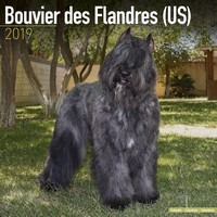 Bouvier Des Flandres (Us) Wall Calendar 2019 by Avonside