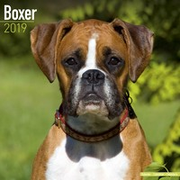 Boxer (Euro) Wall Calendar 2019 by Avonside