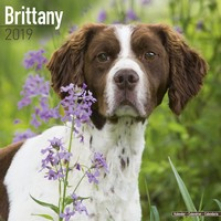 Brittany Wall Calendar 2019 by Avonside