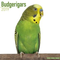 Budgerigar Wall Calendar 2019 by Avonside