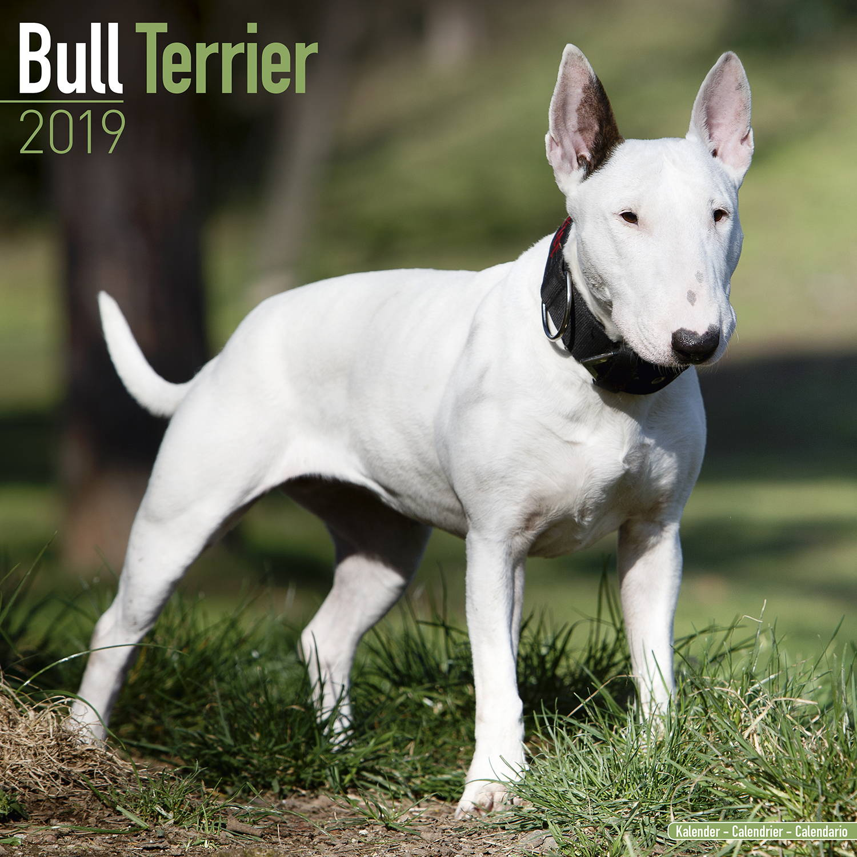 Bull Terrier Calendar, Dog Breed Calendars