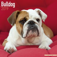 Bulldog Wall Calendar 2019 by Avonside