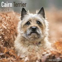 Cairn Terrier Wall Calendar 2019 by Avonside