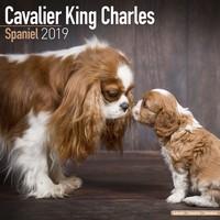 Cavalier King Charles Wall Calendar 2019 by Avonside