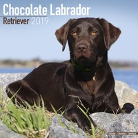 Chocolate Lab Retriever Wall Calendar 2019 by Avonside