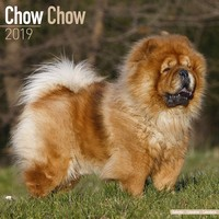 Chow Chow Wall Calendar 2019 by Avonside