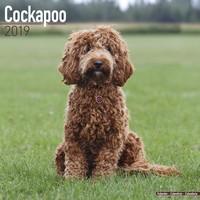 Cockapoo Wall Calendar 2019 by Avonside