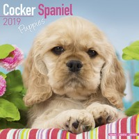 Cocker Spaniel Puppies Wall Calendar 2019 by Avonside