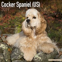 Cocker Spaniel (Us) Wall Calendar 2019 by Avonside