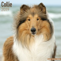 Collie Wall Calendar 2019 by Avonside