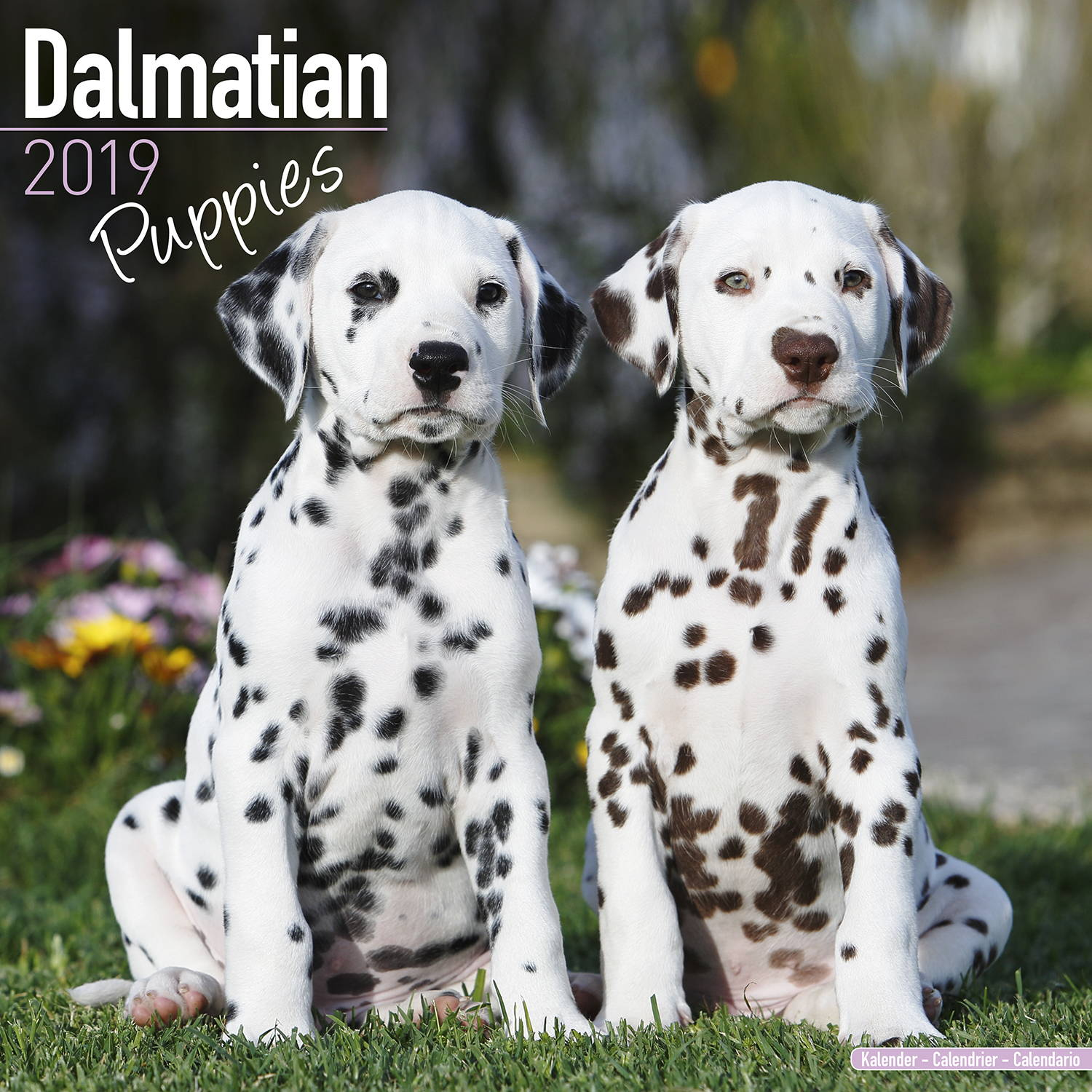 Dalmatian Puppies Calendar 2019 Pet Prints Inc