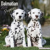 Dalmatian Puppies Wall Calendar 2019 by Avonside