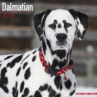 Dalmatian Wall Calendar 2019 by Avonside