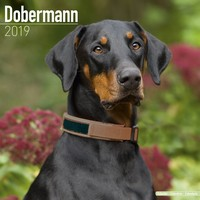 Dobermann (Euro) Wall Calendar 2019 by Avonside