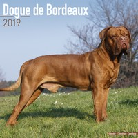 Dogue De Bordeaux Wall Calendar 2019 by Avonside