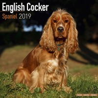English Cocker Spaniel Wall Calendar 2019 by Avonside