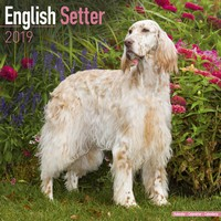English Setter Wall Calendar 2019 by Avonside