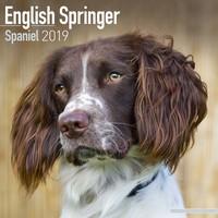 Eng Springer Spaniel (Euro) Wall Calendar 2019 by Avonside