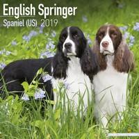 Eng Springer Spaniel (Us) Wall Calendar 2019 by Avonside
