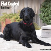 Flatcoated Retriever Wall Calendar 2019 by Avonside