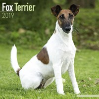 Fox Terrier Wall Calendar 2019 by Avonside