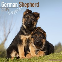 German Shepherd Puppies Wall Calendar 2019 by Avonside