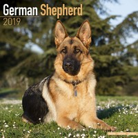 German Shepherd Wall Calendar 2019 by Avonside