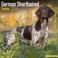 German Shorthair Pointer Wall Calendar 2019 by Avonside