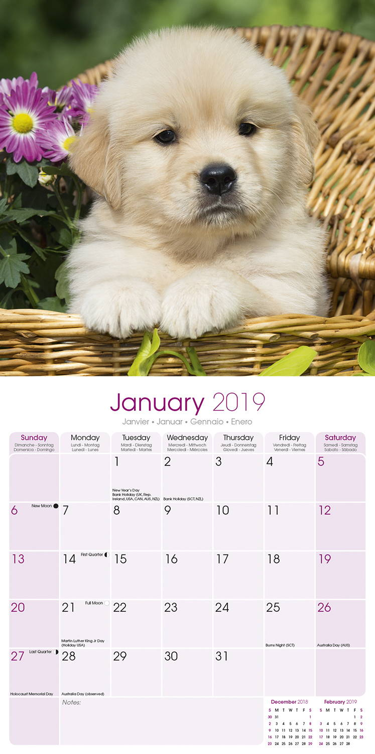 golden retriever calendar dog breed calendars megacalendars