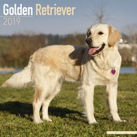 Golden Retriever Wall Calendar 2019 by Avonside