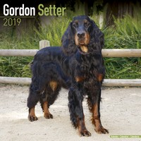 Gordon Setter Wall Calendar 2019 by Avonside