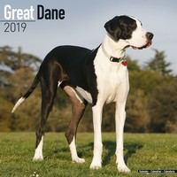 Great Dane (Euro) Wall Calendar 2019 by Avonside