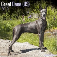 Great Dane (Us) Wall Calendar 2019 by Avonside
