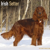 Irish Setter Wall Calendar 2019 by Avonside