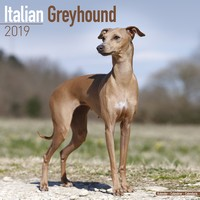 Italian Greyhound Wall Calendar 2019 by Avonside