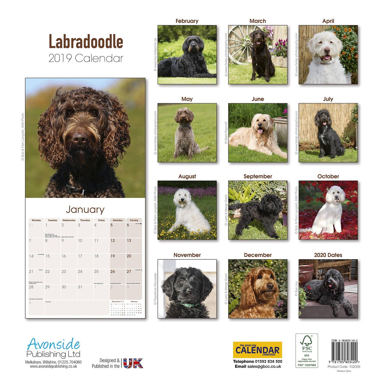 Calendar Dogs : Labradoodle calendar dog breed calendars megacalendars