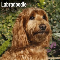 Labradoodle Wall Calendar 2019 by Avonside