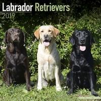 Labrador Ret (Mixed) Wall Calendar 2019 by Avonside