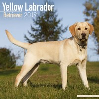 Labrador Ret (Yellow) Wall Calendar 2019 by Avonside
