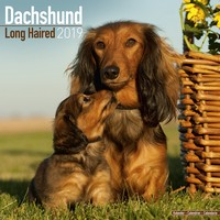 Dachshund (Longhaired) Wall Calendar 2019 by Avonside