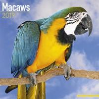 Macaws Wall Calendar 2019 by Avonside