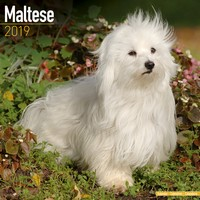 Maltese Wall Calendar 2019 by Avonside