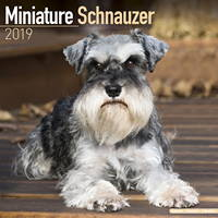 Schnauzer Miniature Wall Calendar 2019 by Avonside