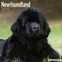 Newfoundland Wall Calendar 2019 by Avonside
