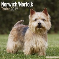 Norwich/Norfolk Terrier Wall Calendar 2019 by Avonside