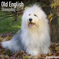 Old English Sheepdog Wall Calendar 2019 by Avonside